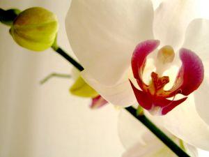 706363_orchids_3.jpg